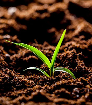 Cura del suolo